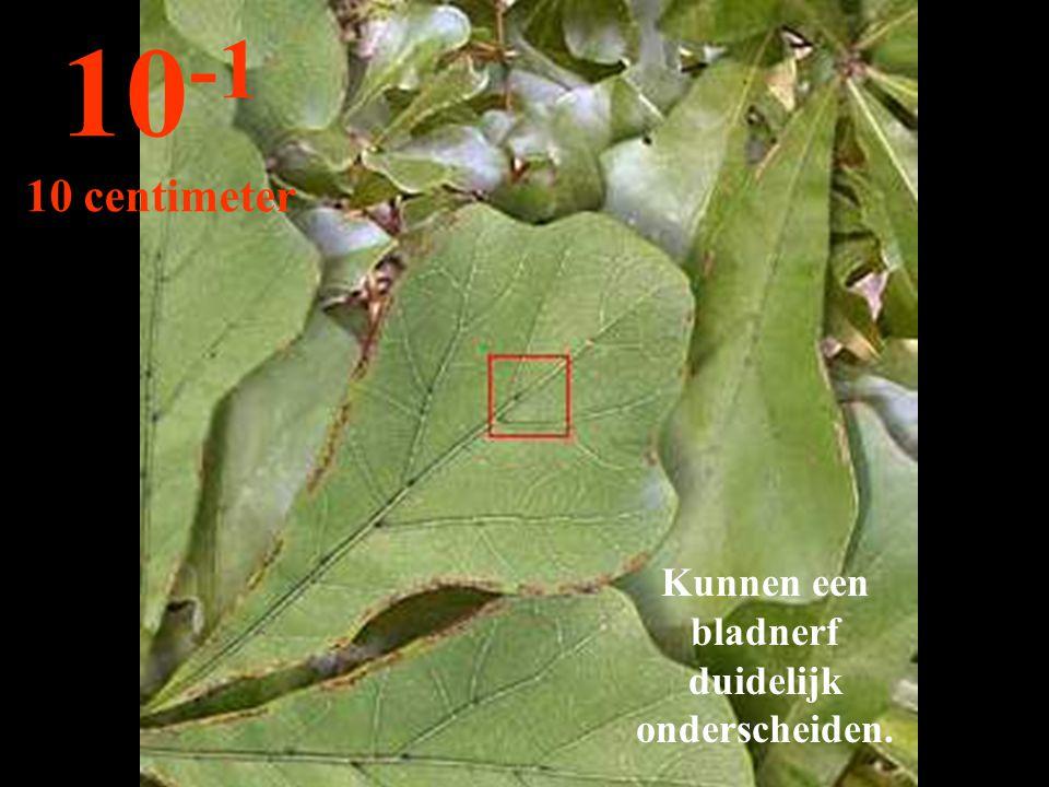 Kunnen een bladnerf duidelijk onderscheiden.