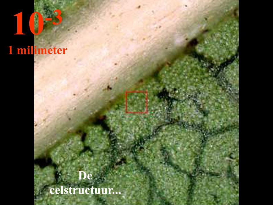 10-3 1 milimeter De celstructuur...