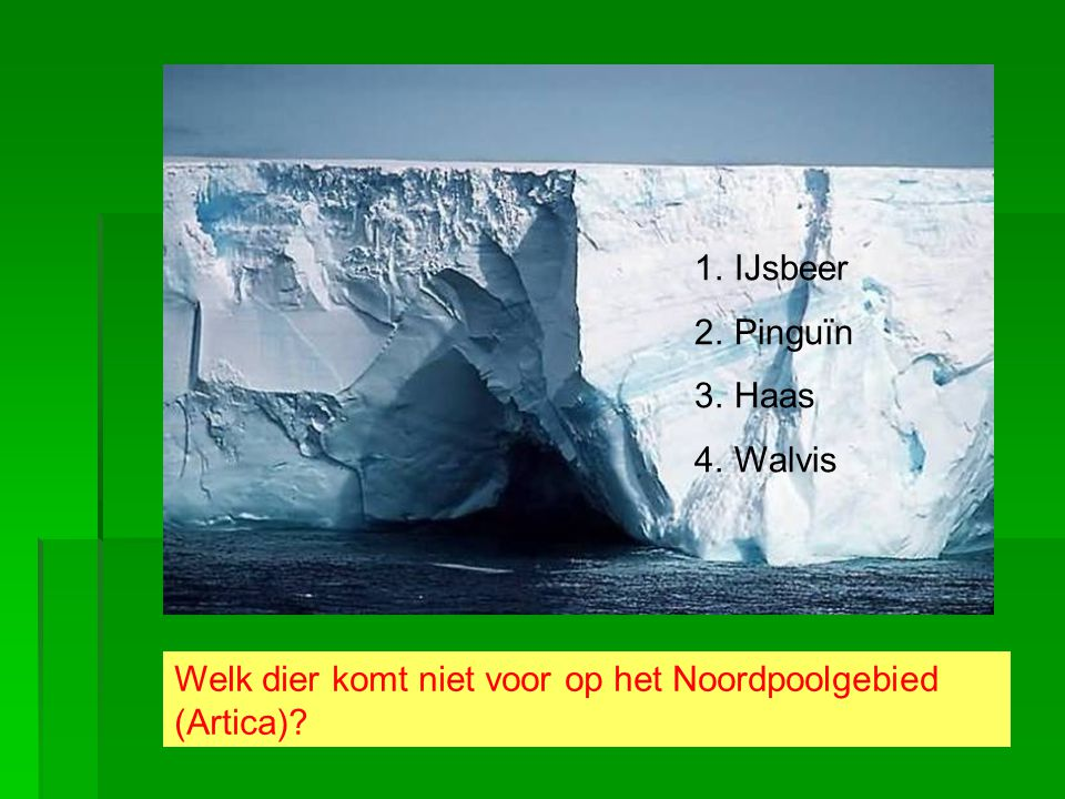 IJsbeer Pinguïn Haas Walvis Welk dier komt niet voor op het Noordpoolgebied (Artica)