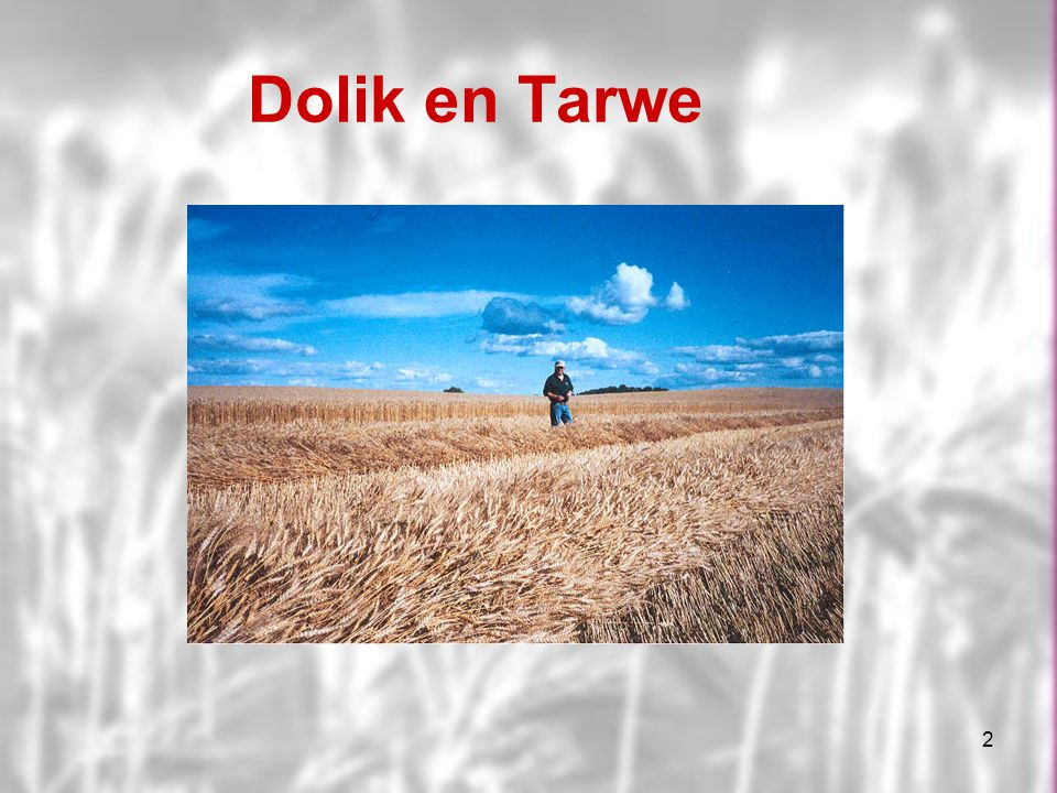 Dolik en Tarwe