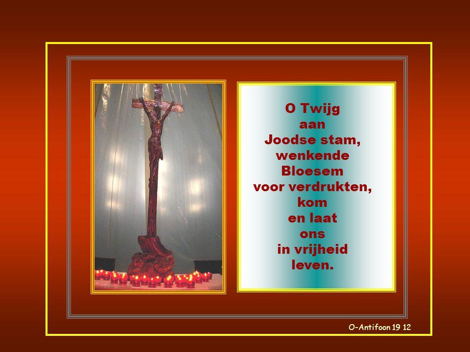 O Twijg aan Joodse stam, wenkende Bloesem voor verdrukten, kom en laat ons in vrijheid leven.