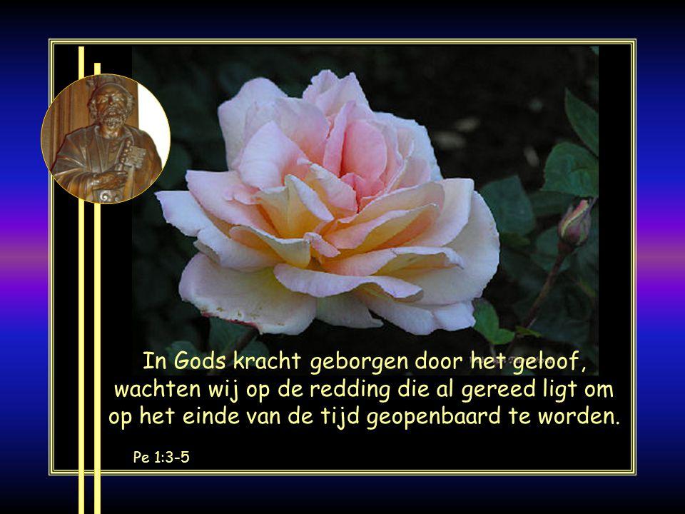 In Gods kracht geborgen door het geloof, wachten wij op de redding die al gereed ligt om op het einde van de tijd geopenbaard te worden.