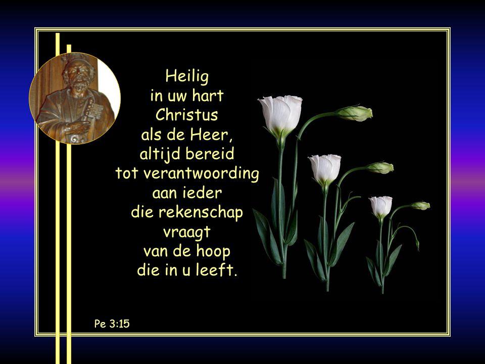 Heilig in uw hart Christus als de Heer, altijd bereid tot verantwoording aan ieder die rekenschap vraagt van de hoop die in u leeft.