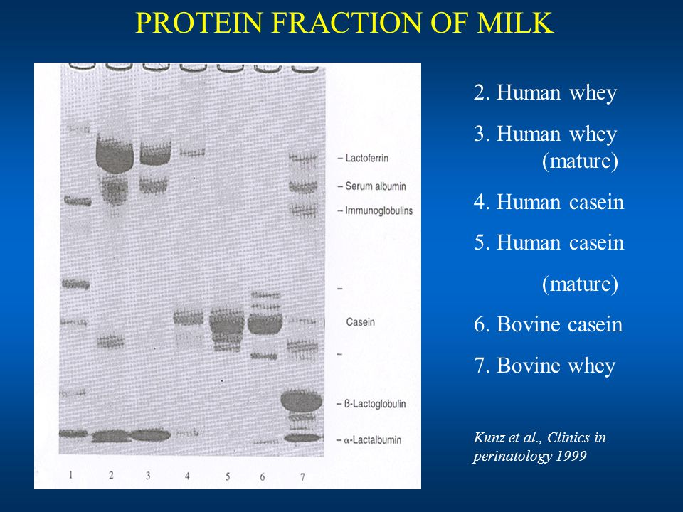 PROTEIN FRACTION OF MILK