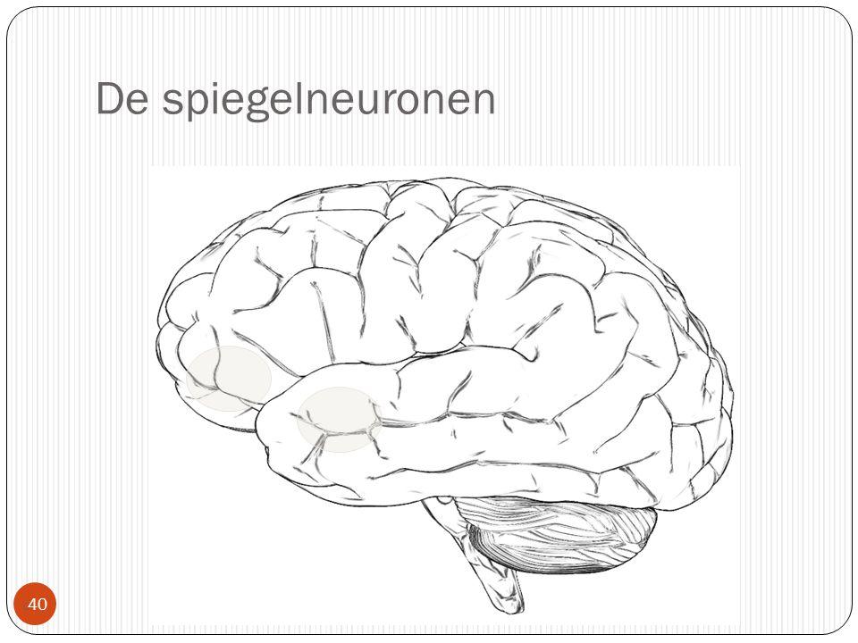 De spiegelneuronen
