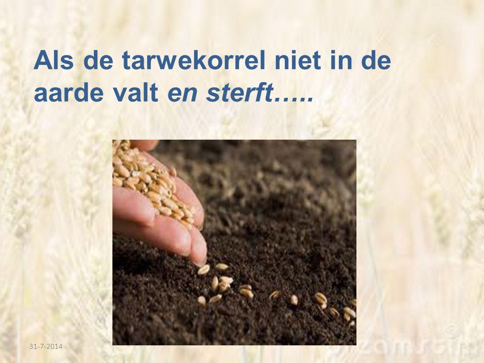 Als de tarwekorrel niet in de aarde valt en sterft…..