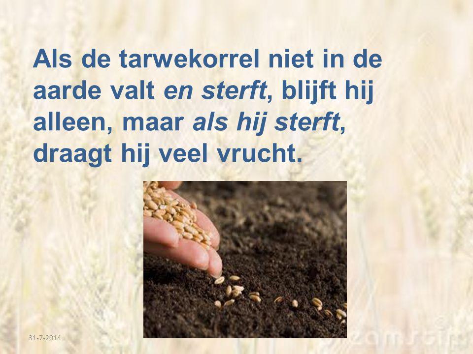 Als de tarwekorrel niet in de aarde valt en sterft, blijft hij alleen, maar als hij sterft, draagt hij veel vrucht.