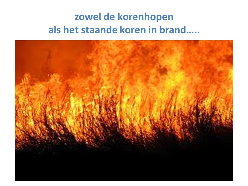 zowel de korenhopen als het staande koren in brand…..