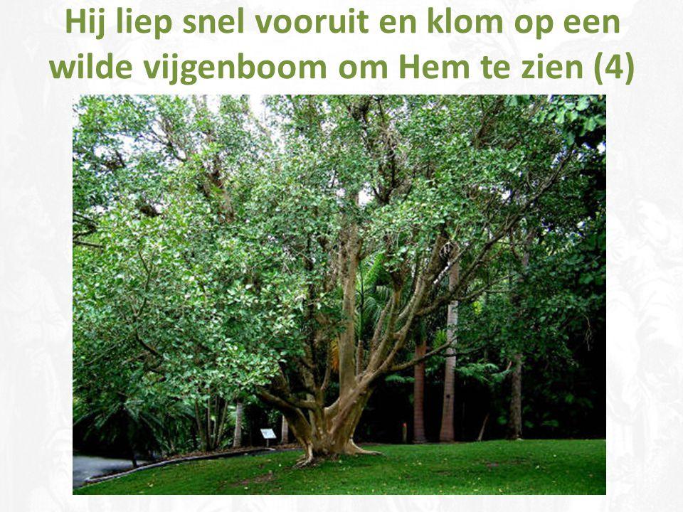 Hij liep snel vooruit en klom op een wilde vijgenboom om Hem te zien (4)