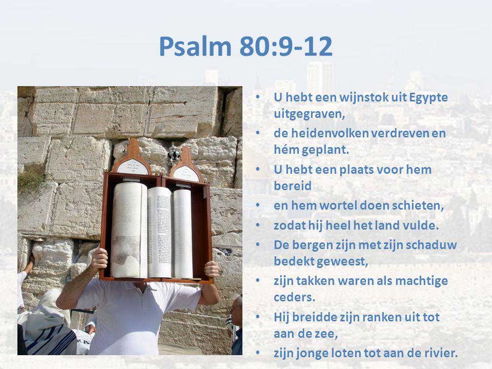 Psalm 80:9-12 U hebt een wijnstok uit Egypte uitgegraven,
