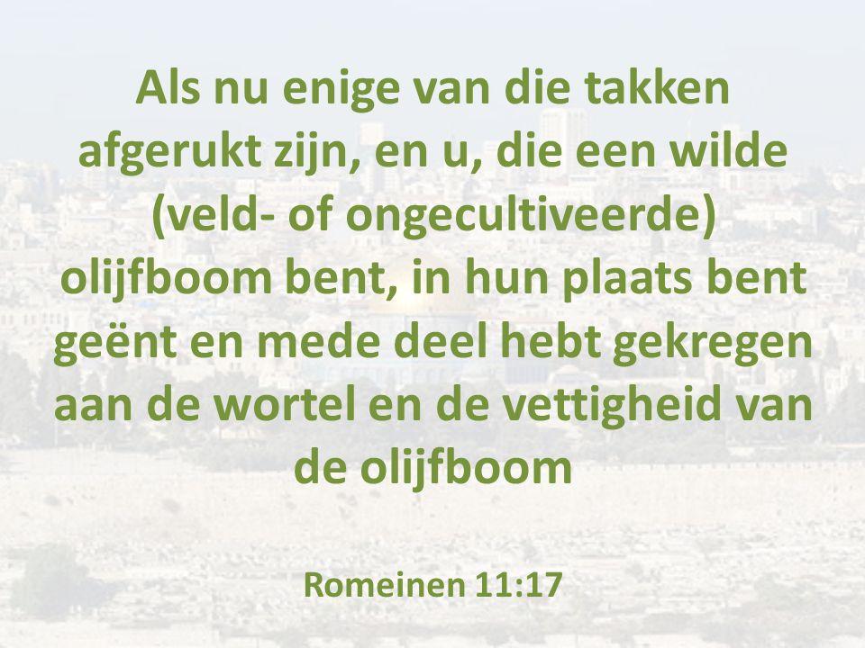 Als nu enige van die takken afgerukt zijn, en u, die een wilde (veld- of ongecultiveerde) olijfboom bent, in hun plaats bent geënt en mede deel hebt gekregen aan de wortel en de vettigheid van de olijfboom Romeinen 11:17