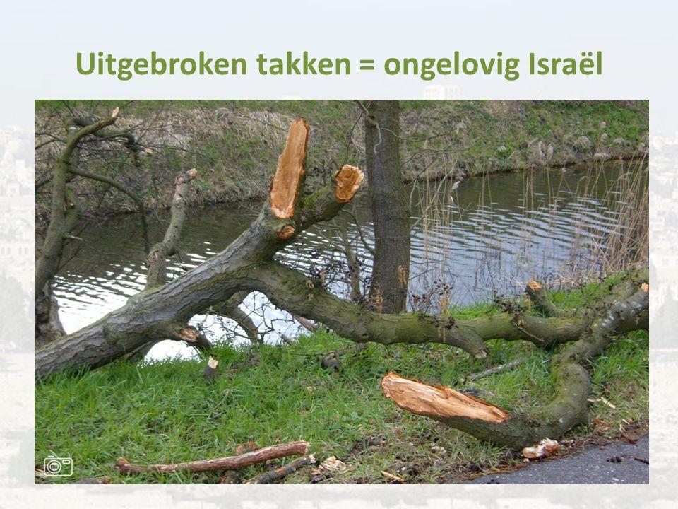 Uitgebroken takken = ongelovig Israël