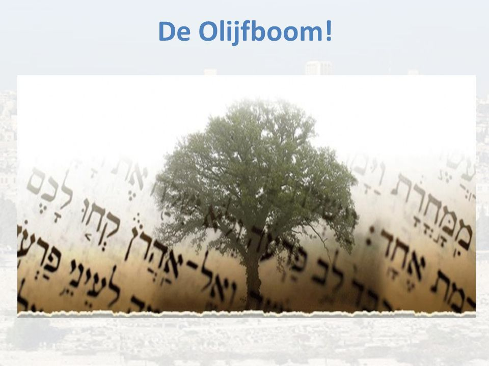 De Olijfboom!