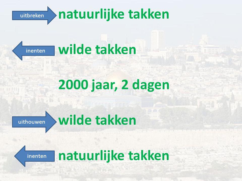 natuurlijke takken wilde takken 2000 jaar, 2 dagen wilde takken natuurlijke takken