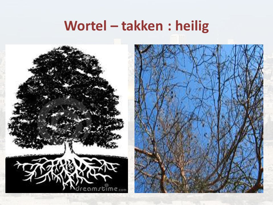 Wortel – takken : heilig