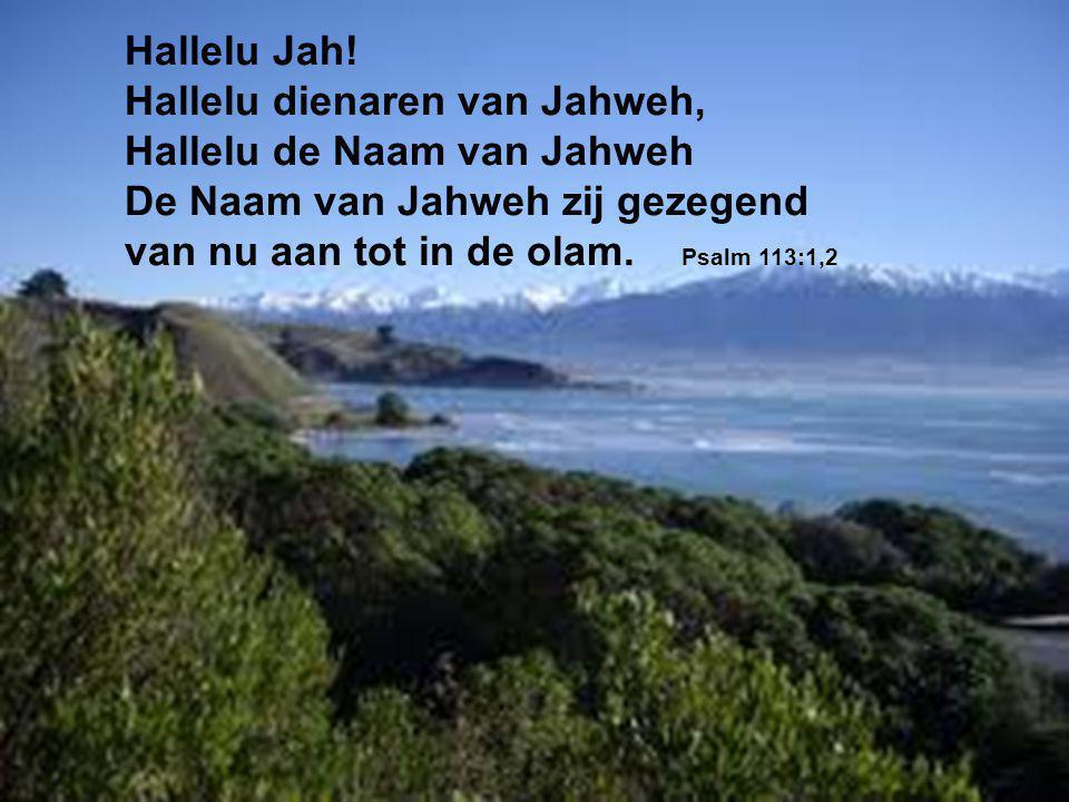 Hallelu Jah! Hallelu dienaren van Jahweh, Hallelu de Naam van Jahweh. De Naam van Jahweh zij gezegend.