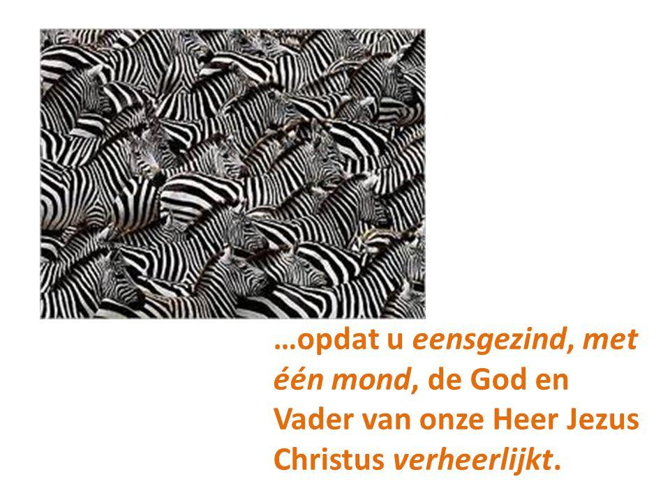 …opdat u eensgezind, met één mond, de God en Vader van onze Heer Jezus Christus verheerlijkt.