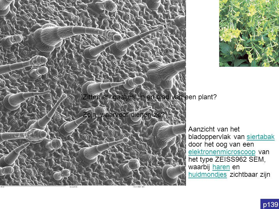Zitten er gaatjes in en blad van een plant