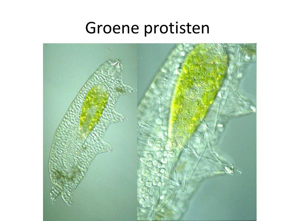 Groene protisten