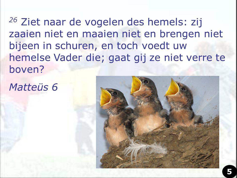 26 Ziet naar de vogelen des hemels: zij zaaien niet en maaien niet en brengen niet bijeen in schuren, en toch voedt uw hemelse Vader die; gaat gij ze niet verre te boven