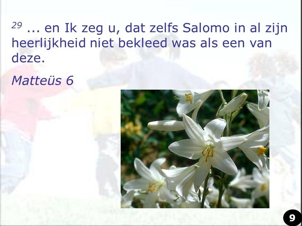 29 ... en Ik zeg u, dat zelfs Salomo in al zijn heerlijkheid niet bekleed was als een van deze.