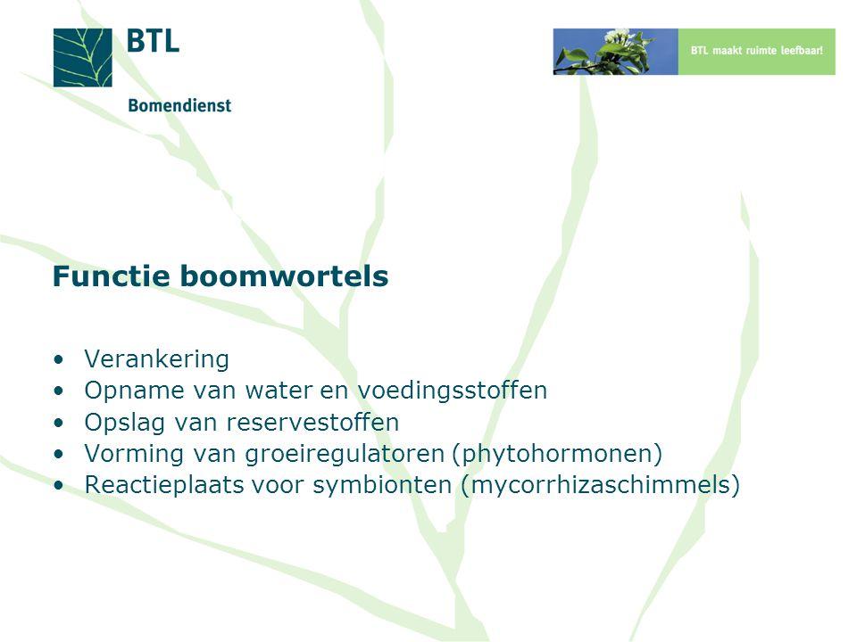 Functie boomwortels Verankering Opname van water en voedingsstoffen