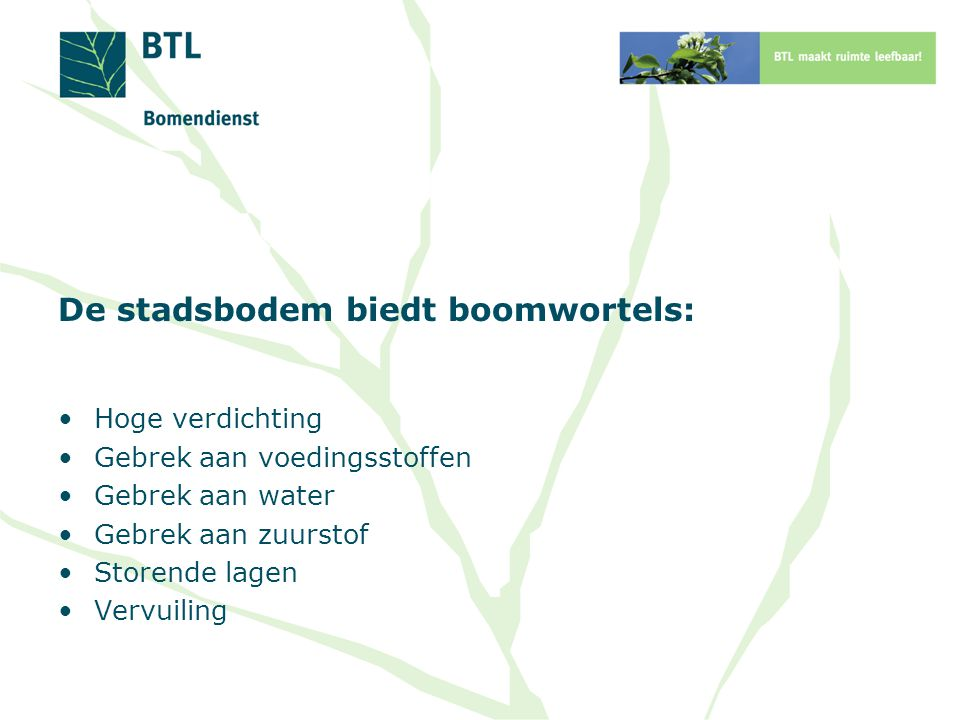 De stadsbodem biedt boomwortels: