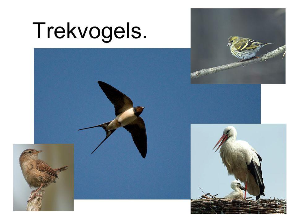 Trekvogels.