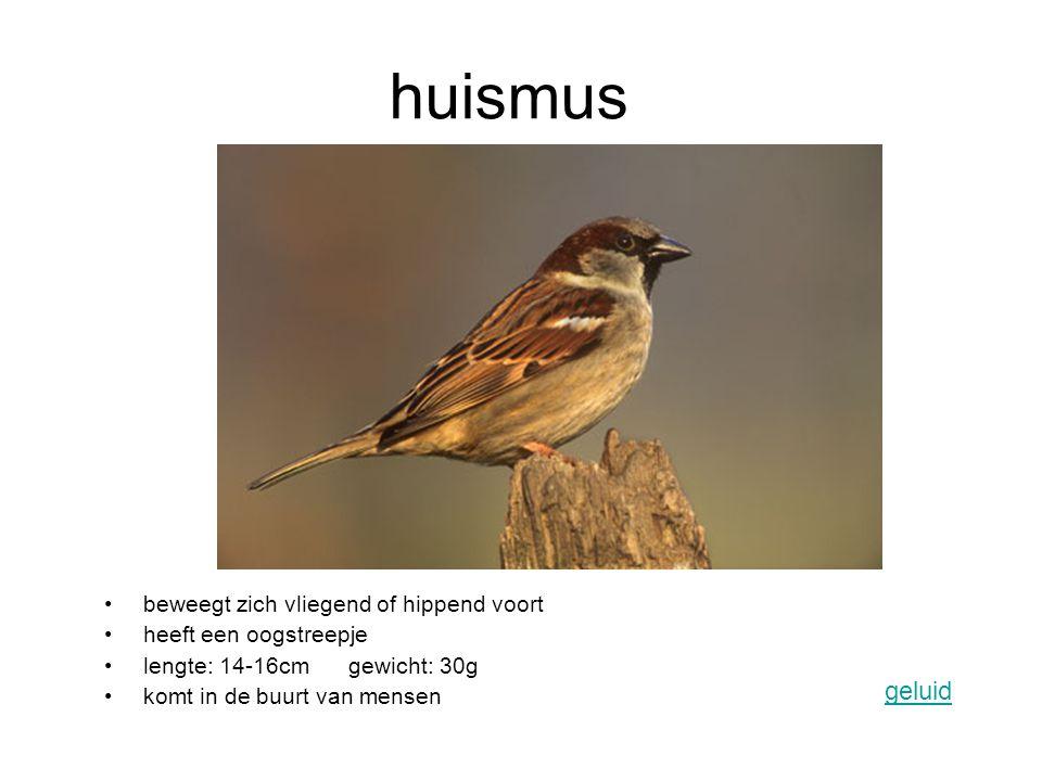 huismus geluid beweegt zich vliegend of hippend voort