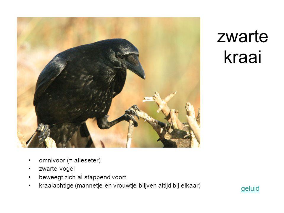 zwarte kraai geluid omnivoor (= alleseter) zwarte vogel