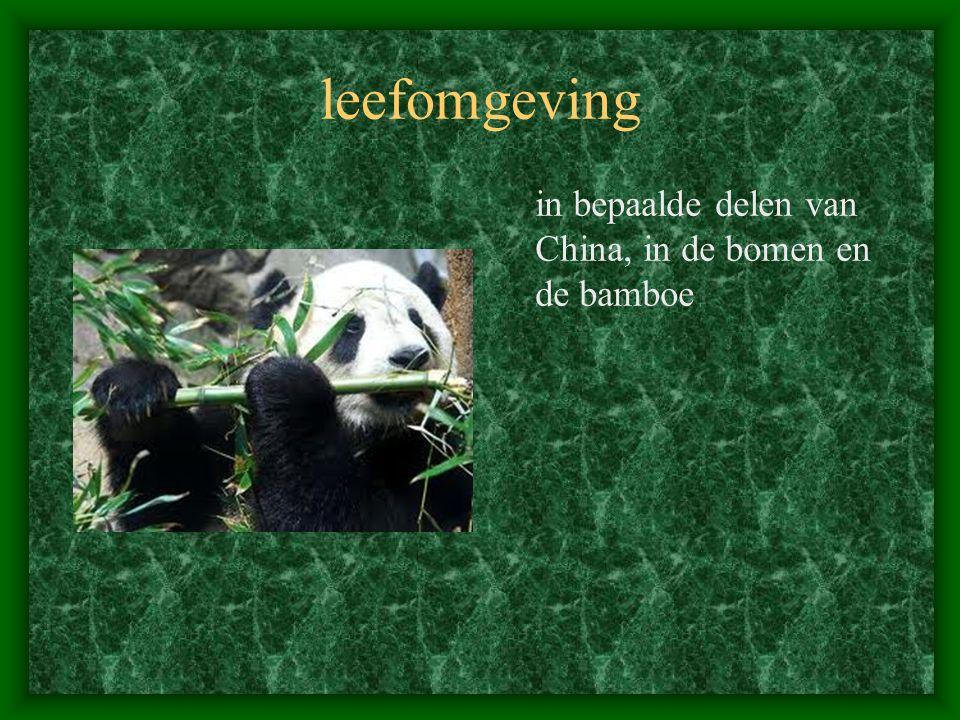leefomgeving in bepaalde delen van China, in de bomen en de bamboe