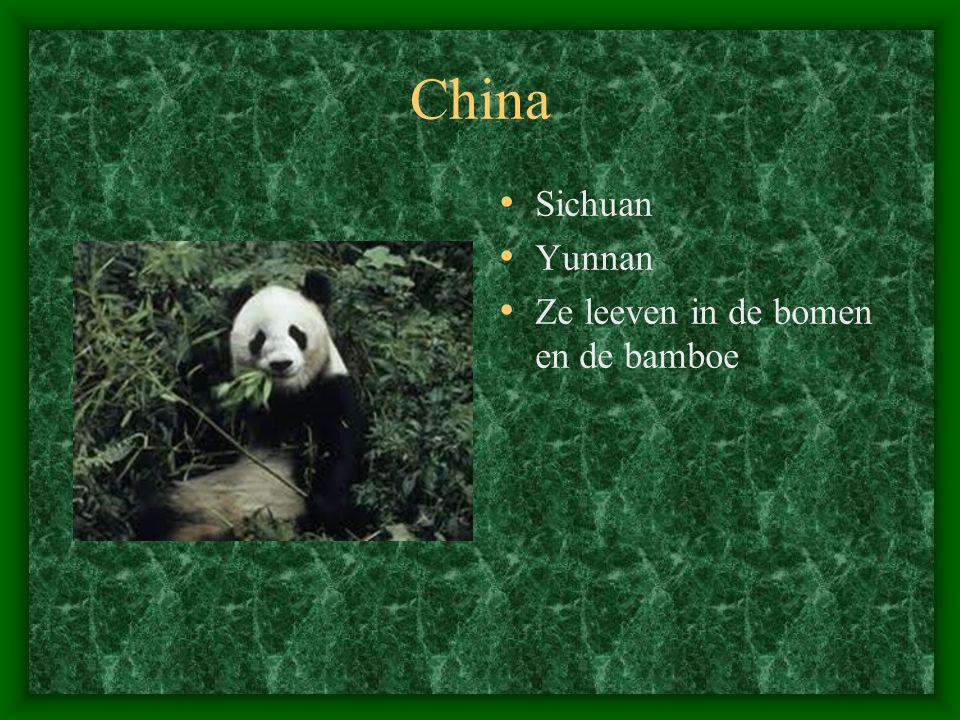 China Sichuan Yunnan Ze leeven in de bomen en de bamboe