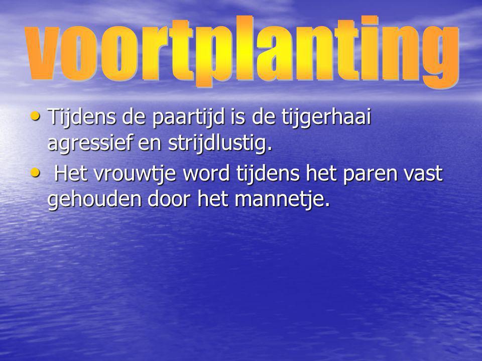 voortplanting Tijdens de paartijd is de tijgerhaai agressief en strijdlustig.