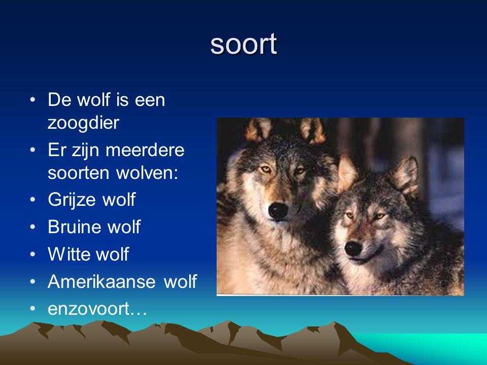 soort De wolf is een zoogdier Er zijn meerdere soorten wolven: