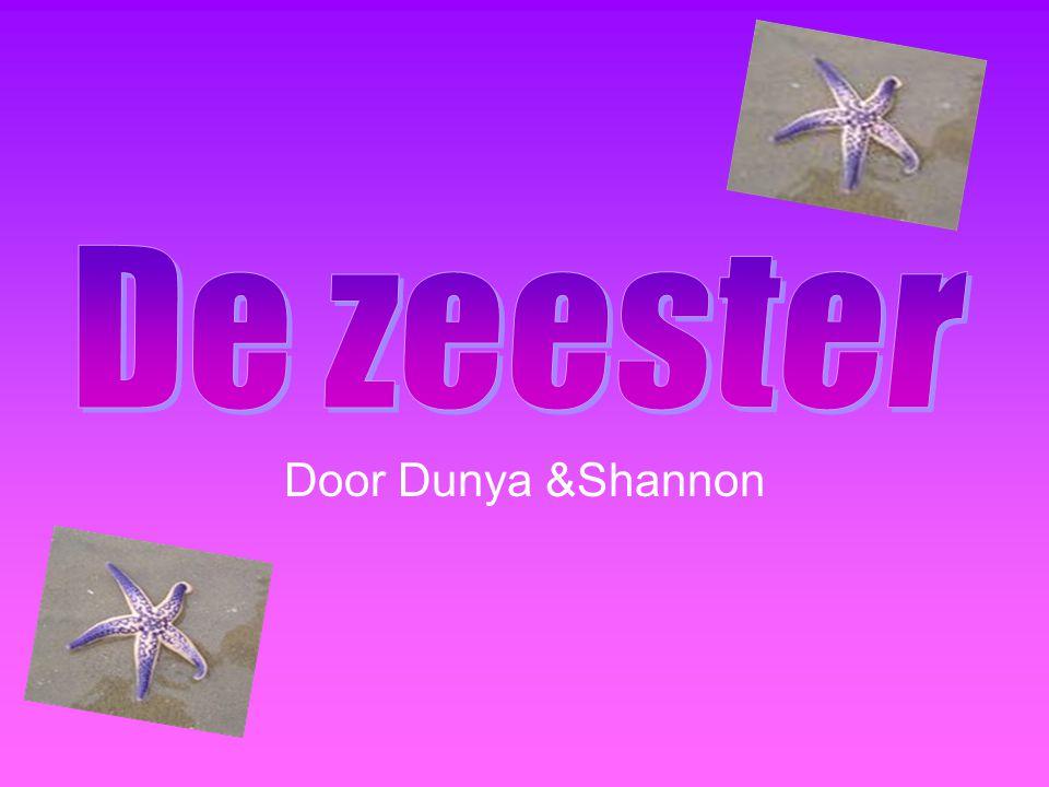 De zeester Door Dunya &Shannon