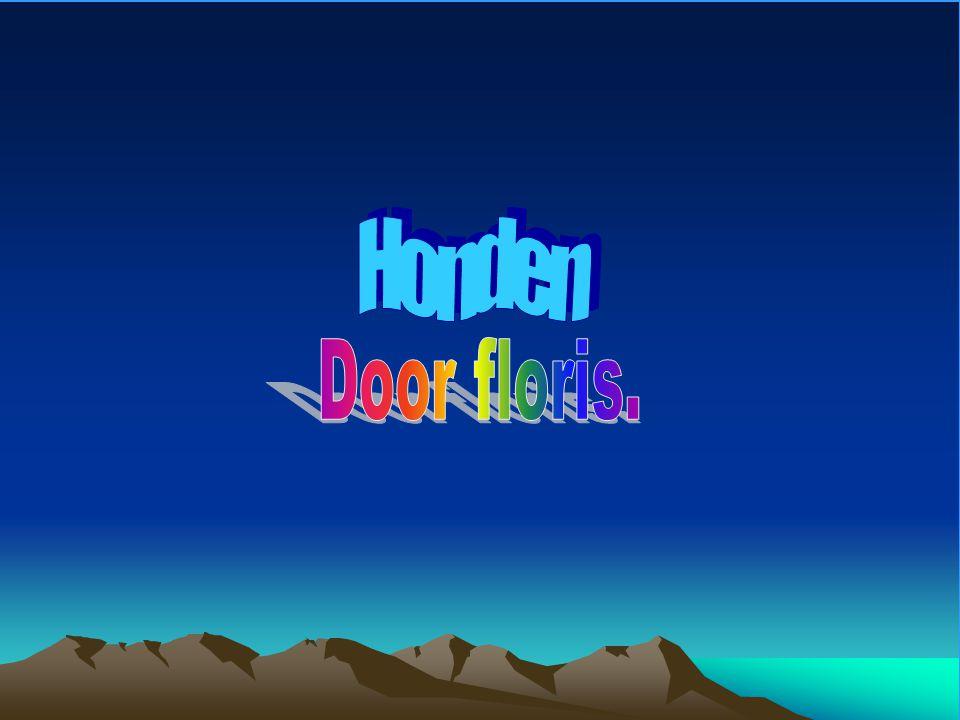 Honden Door floris.