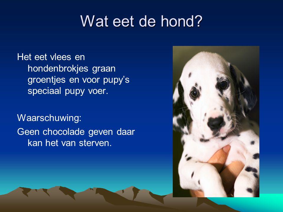 Wat eet de hond Het eet vlees en hondenbrokjes graan groentjes en voor pupy's speciaal pupy voer. Waarschuwing: