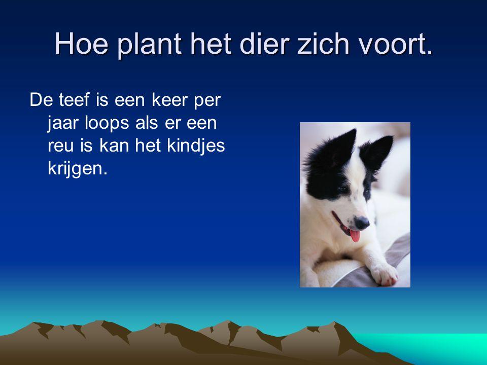 Hoe plant het dier zich voort.