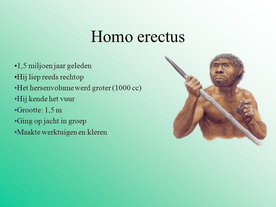 Homo erectus 1,5 miljoen jaar geleden Hij liep reeds rechtop