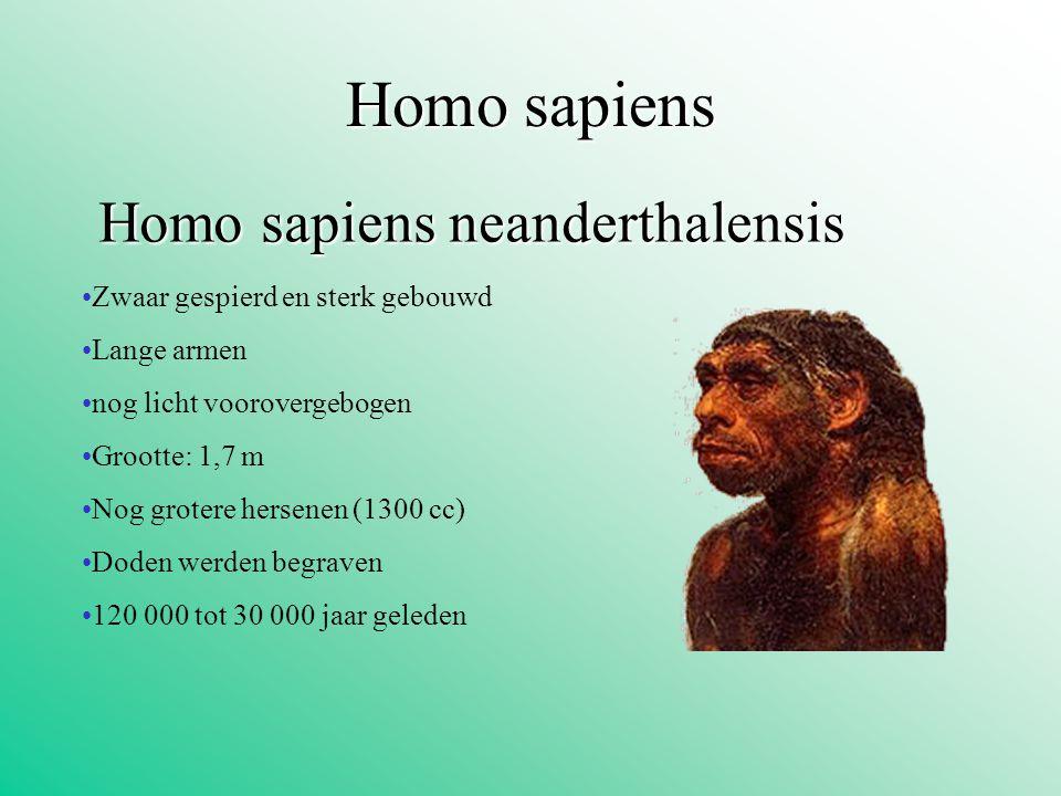 Homo sapiens Homo sapiens neanderthalensis