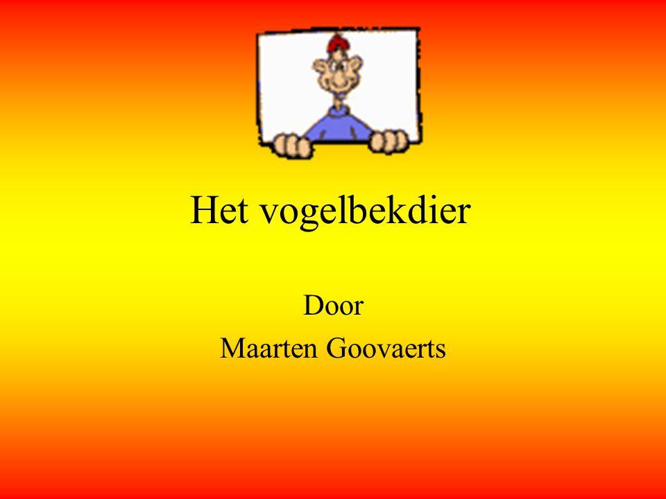 Door Maarten Goovaerts