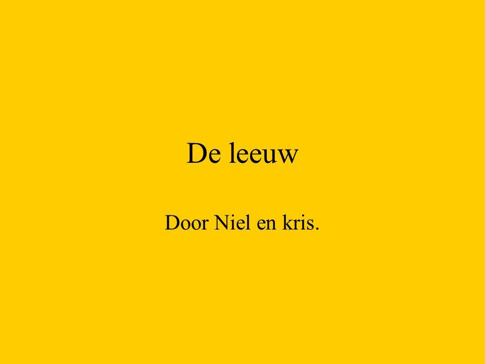 De leeuw Door Niel en kris.