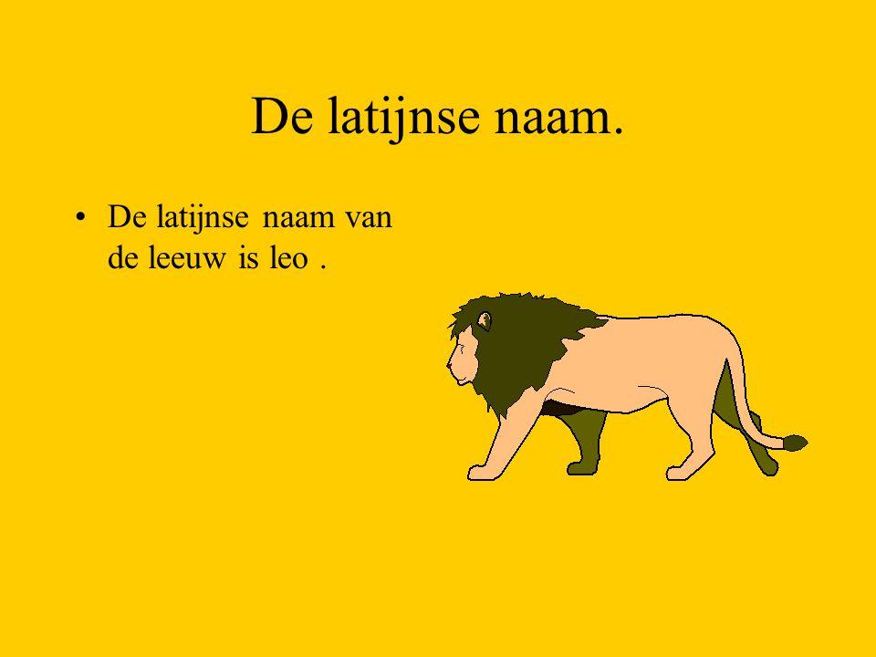 De latijnse naam. De latijnse naam van de leeuw is leo .