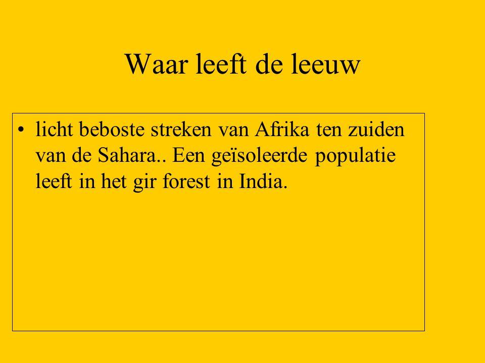 Waar leeft de leeuw licht beboste streken van Afrika ten zuiden van de Sahara..