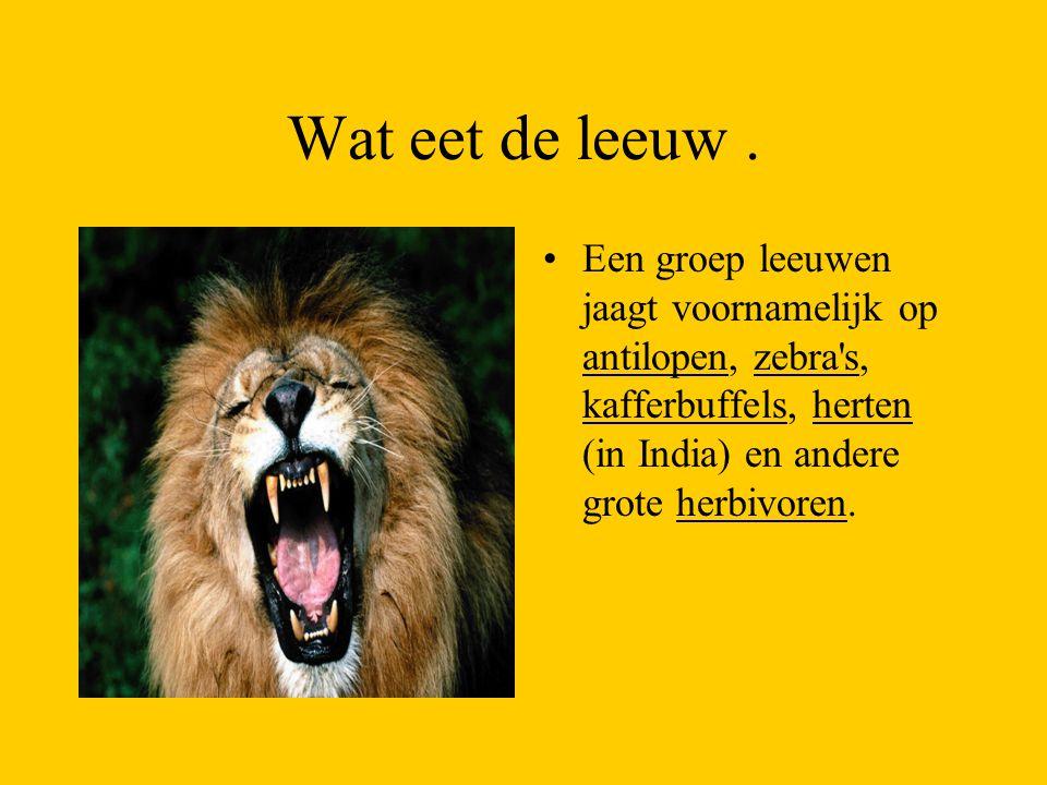 Wat eet de leeuw .
