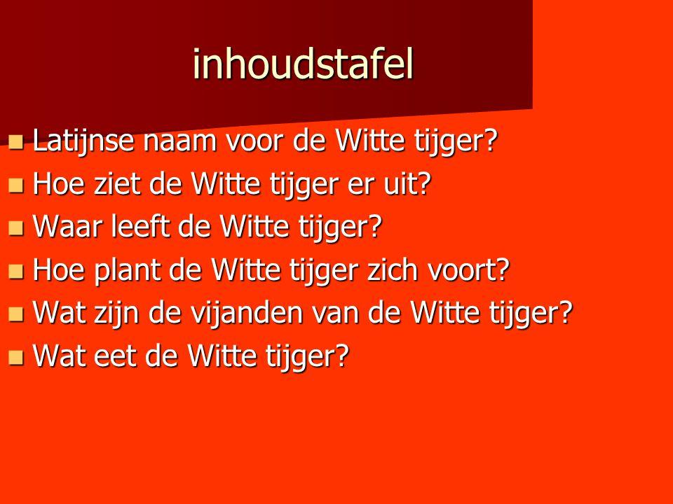 inhoudstafel Latijnse naam voor de Witte tijger