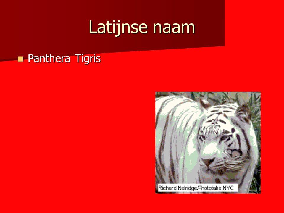 Latijnse naam Panthera Tigris