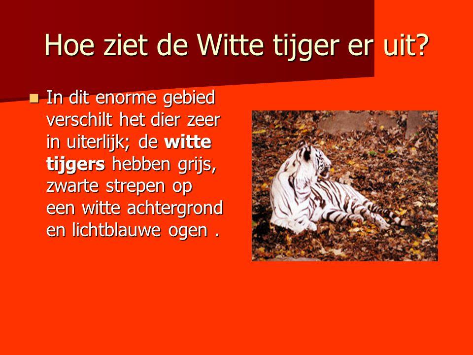 Hoe ziet de Witte tijger er uit
