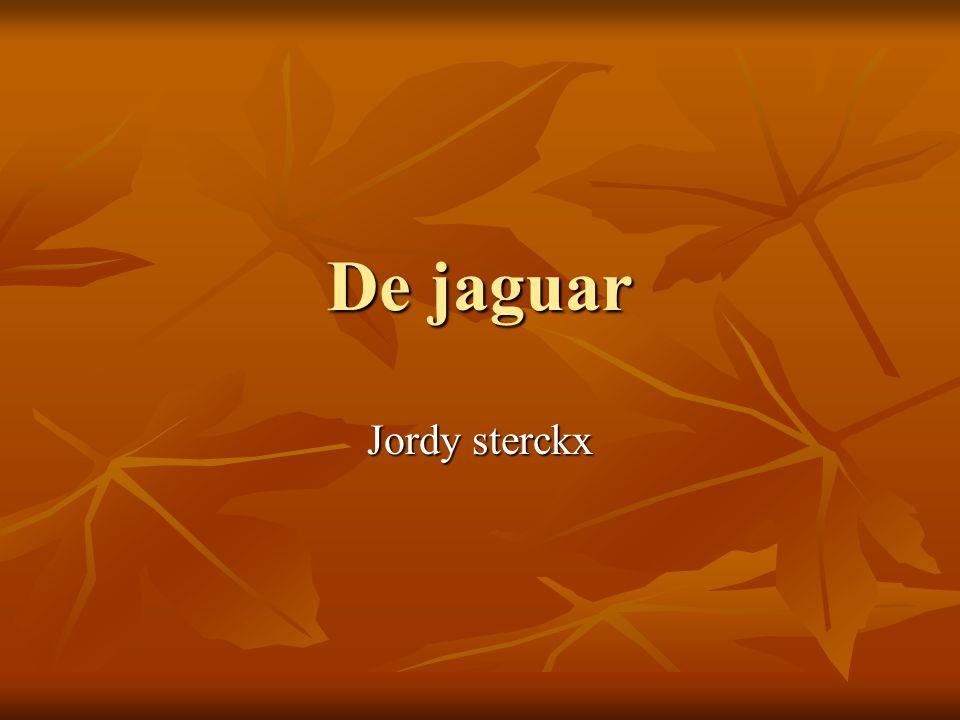 De jaguar Jordy sterckx