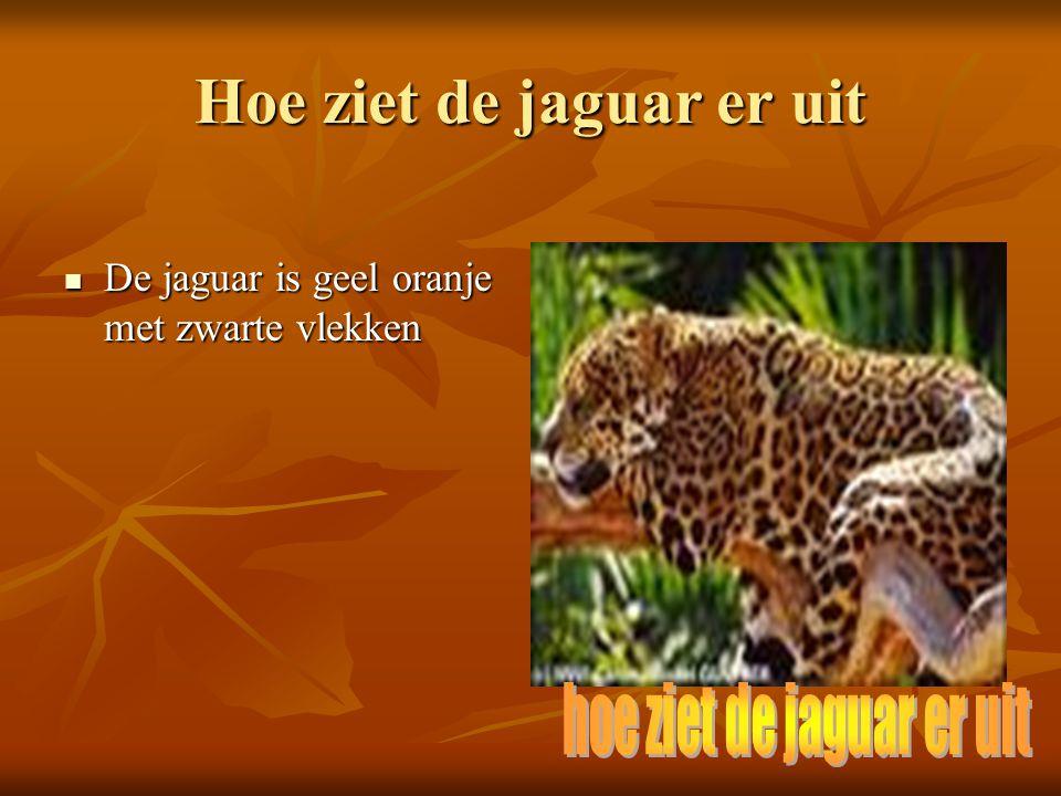 Hoe ziet de jaguar er uit